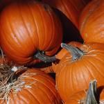 """Pumpkin Patch"" by JacquelineArndt"