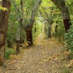 """Autumn path in Provence forest"" by frenchlandscapes"