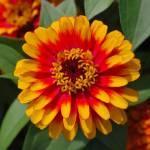 """""""Flower 1"""" by Steve_Wolf"""