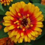 """""""Flower 2"""" by Steve_Wolf"""