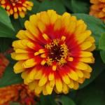 """""""Flower 3"""" by Steve_Wolf"""
