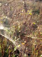 The Spider and Web