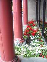 Columns and Flora