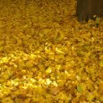 """""""Fall Fallen Leaves"""" by donjo"""