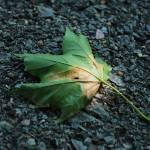 """""""Leaf on ground"""" by Denkyem"""