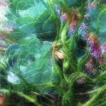 """Abstract Garden"" by BarbaraBrownPhotography"