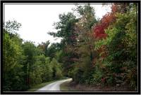 Fall Country Road thru the Forrest