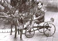 Boy on Cart with Pitbull