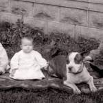 """Children and their Pitbull"" by BreedHistoryCards"