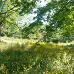 """Owen Park Woodlands"" by donjo"