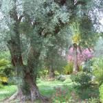 """""""Renoir"""