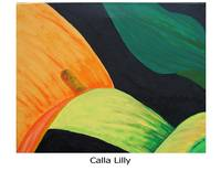 Calla Lilly a