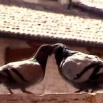 """""""Pombinhos em Assis - Itália 2004"""" by fabiopenna"""
