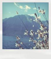 polaroid summer
