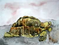 tortoise turtle painting