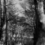 """Framed Trees bw"" by mjflores"
