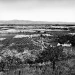 """Overlooking Santa Clara Valley c1900"" by worldwidearchive"