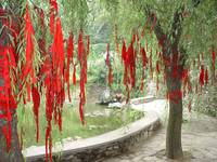 Xiangshui Temple: Red cloth strips in the trees