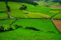 Pastures in the Azores