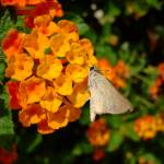 """""""Butterfly"""" by Mohamed-Fadly"""