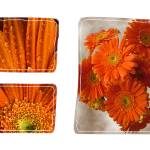 """Flower Triptych"" by bobsmithuk"
