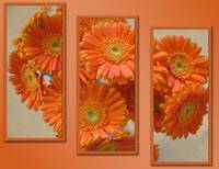 Orange Flowers Triptych
