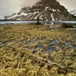 """""""Crowfoot Mountain"""" by fikretonal"""