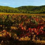 """Autumn in Provence vineyard - Panoramic landscape"" by frenchlandscapes"