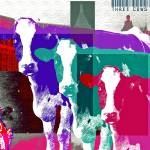 """Three_Cows_In_New_York"" by JoshuaMcDonald"