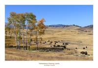 Yellowstone Grazing Lands