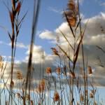 """Okavango Delta clouds"" by MichaelPoliza"