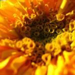 """Sunshine"" by aditidesai"