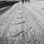"""""""Walking at Shellness"""" by sarahmedway"""