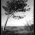 """Lonesome tree"" by blankcanvasphotography"
