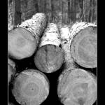 """Logs, logs, logs"" by blankcanvasphotography"