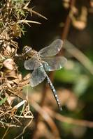 Migrant Hawker Side