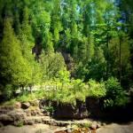 """Gooseberry Falls"" by kellychandler"