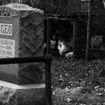 """""""Cemetary Chickens"""" by carlnelson"""
