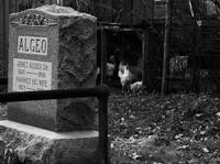Cemetary Chickens
