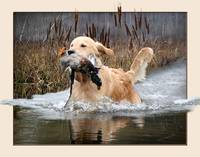 A Water Retrieve