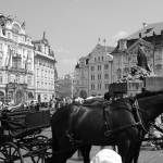"""Horses in Prague"" by MeggHearne"