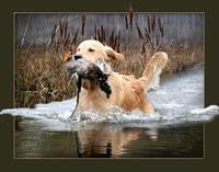 A Water Retrieve 2