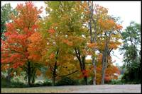 Fall  trees  Landscape