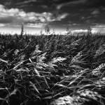"""""""Straws In Wind"""" by jbo"""