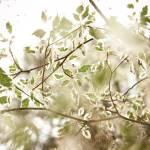 """""""Arboretum - Ryan"""" by bleev"""