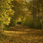 """Autumn promenade"" by Berezvai"