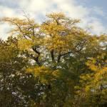 """Autumn trees"" by Berezvai"