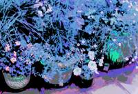 4 pots and roses blue
