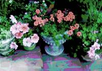 Flower pots on steps coral flowers