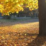 """""""Close-up of Autumn in Prospect Park"""" by alicia954"""